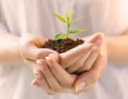 Closeup shot of a woman holding a green plant in palm of her hand. Close up hand holding a a young fresh sprout. Shallow depth of field with focus on seedling.